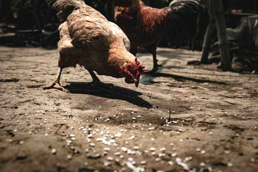 How to Sue for Livestock Injury