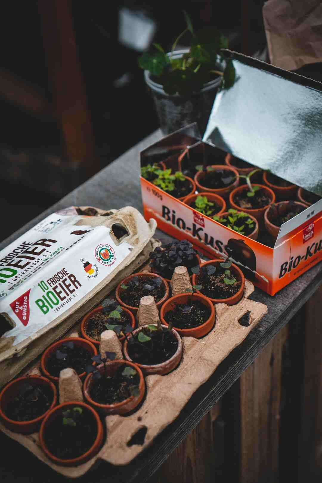 How to keep gardening tools from rusting