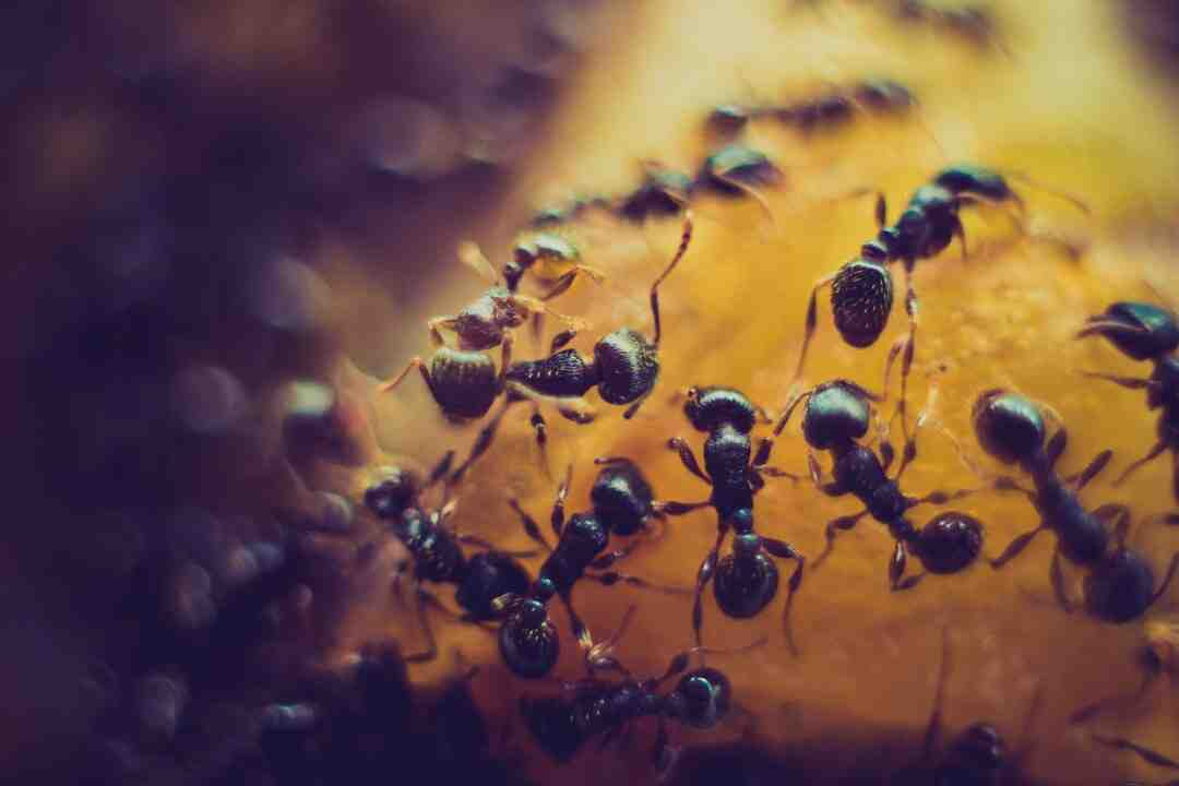 What do ants hate the most?